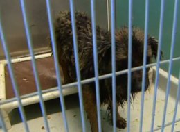 A Canine Horror Story: 64 Dying Dogs Held Hostage In Buildings Without Windows