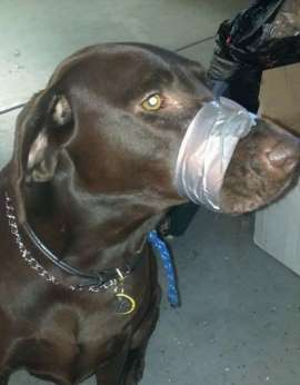 Woman Arrested In N. Carolina For Allegedly Taping Dog's Muzzle Shut