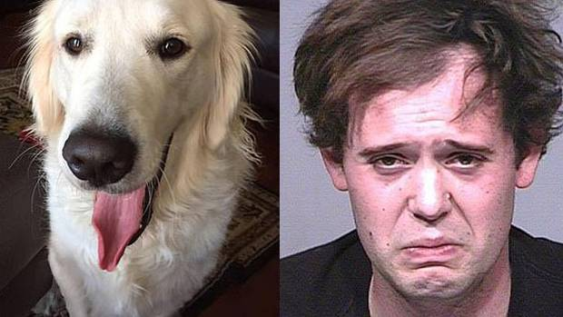 Man accused of stabbing service dog over 100 times and cutting throat