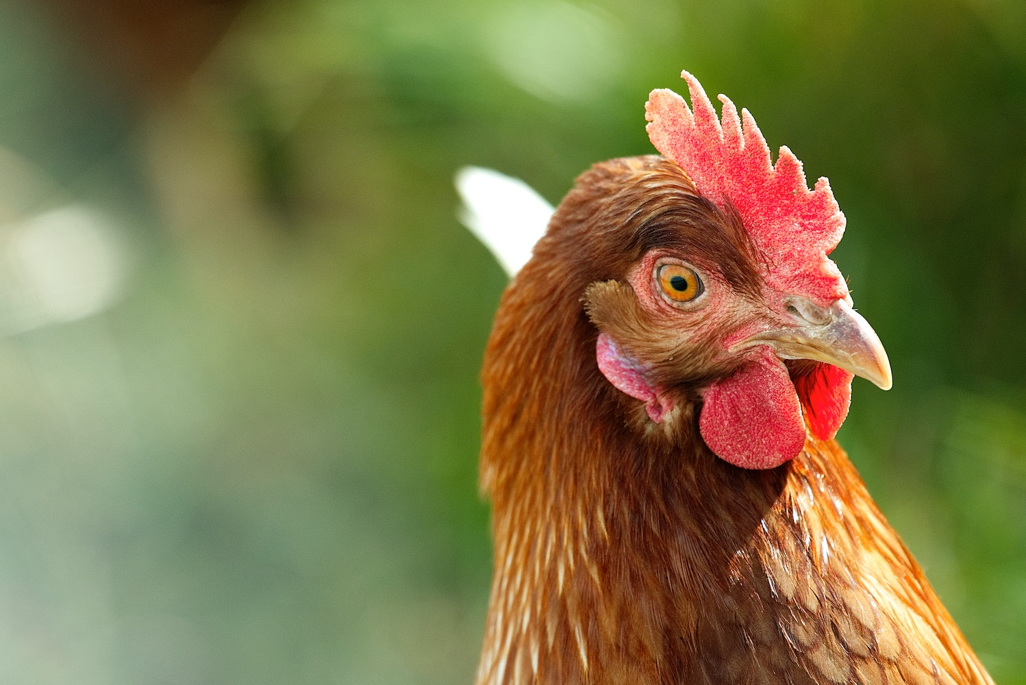 Eastern Cape gang attacks homestead with AK-47 and shotguns, steals one chicken